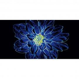 Płytka ścienna FLUORESCENT FLOWER czarna inserto niebieskie błyszcząca 29,7x60 gat. I