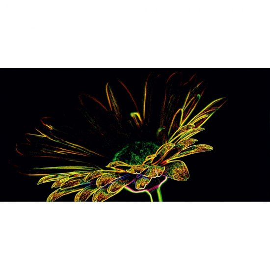 Płytka ścienna FLUORESCENT FLOWER czarna inserto żółte błyszcząca 29,7x60 gat. I