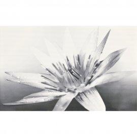 Płytka ścienna NEGRA biało-czarna inserto kwiaty błyszcząca 25x40 gat. I