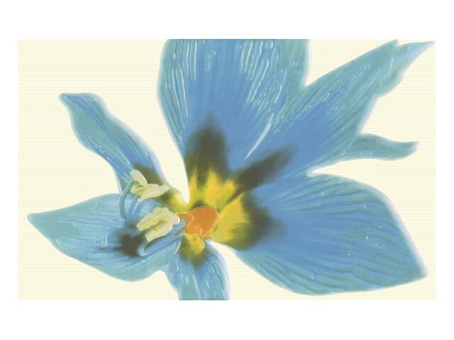 Płytka ścienna Concert Blue inserto drukowane Kwiat 25x40 Paradyż