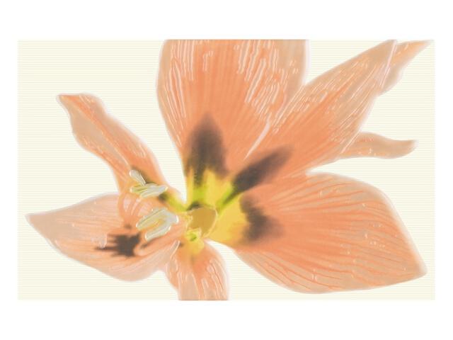 Płytka ścienna Concert Orange Inserto drukowane Kwiat 25x40 Paradyż