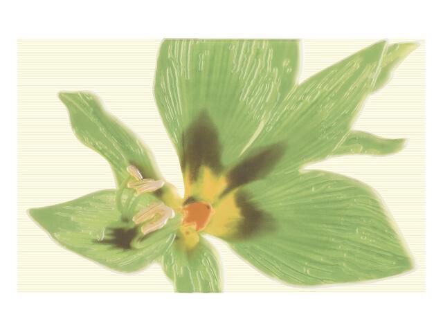 Płytka ścienna Concert Verde Inserto drukowane Kwiat 25x40 Paradyż