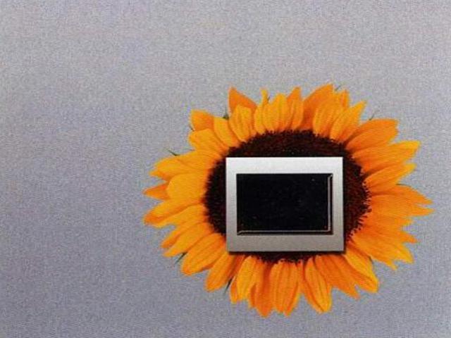 Naklejka dekoracyjna pod wyłącznik słonecznik EL00309 Ergis