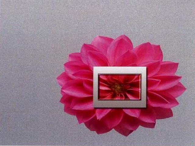 Naklejka dekoracyjna pod wyłącznik kwiat EL00315 Ergis