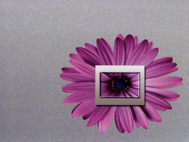 Naklejka dekoracyjna pod wyłącznik kwiat EL00318 Ergis