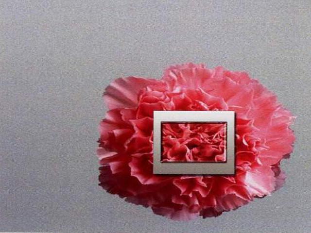 Naklejka dekoracyjna pod wyłącznik kwiat EL00321 Ergis