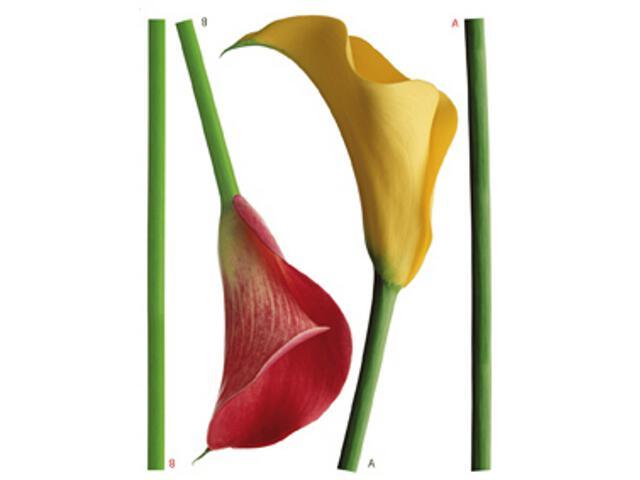 Naklejka dekoracyjna kwiaty F00447 Ergis