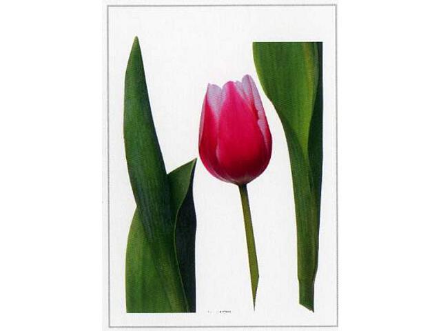 Naklejka dekoracyjna kwiat F00400 Ergis
