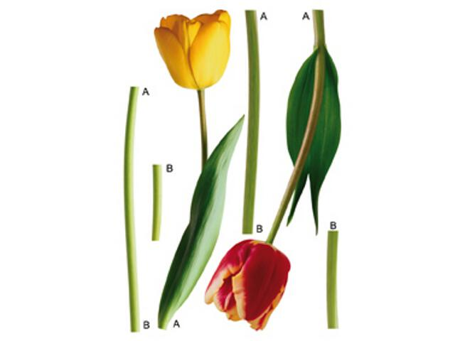 Naklejka dekoracyjna kwiaty F00401 Ergis