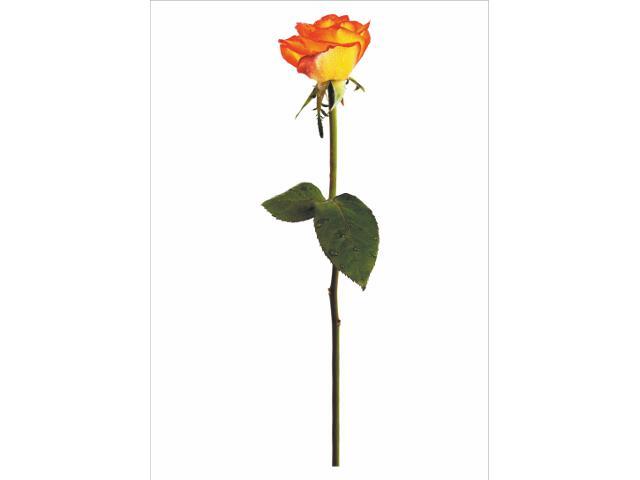 Naklejka dekoracyjna HIT DECOR nr 9 Bella Rosa PRIMACOL