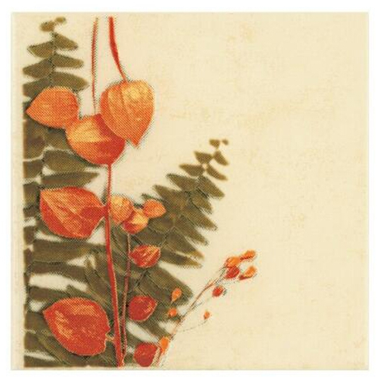 Płytka ścienna Cucina beige motyw foresta suszki 10x10